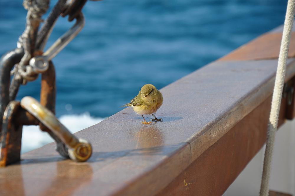 Sur le bateau de l'Amiral!  ;)